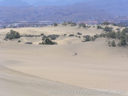 playademaspalomas_031