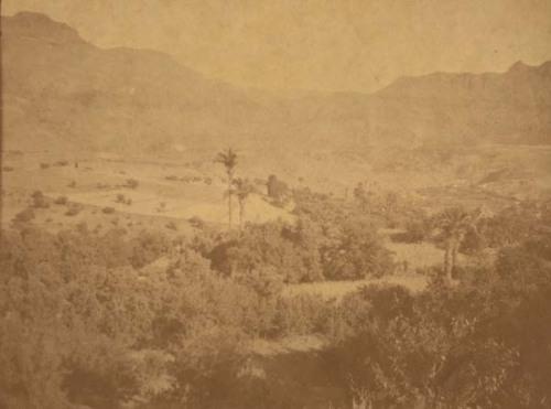 Palmeras y olivos en Tirajana