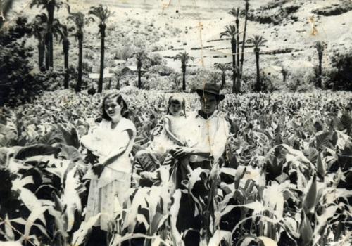 Millo y tabaco