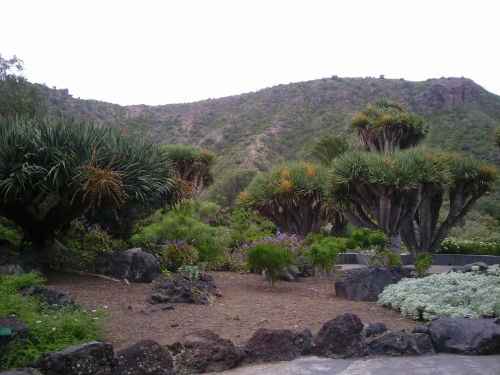 Paseando por el jardin canario retratando gran canaria for El jardin canario